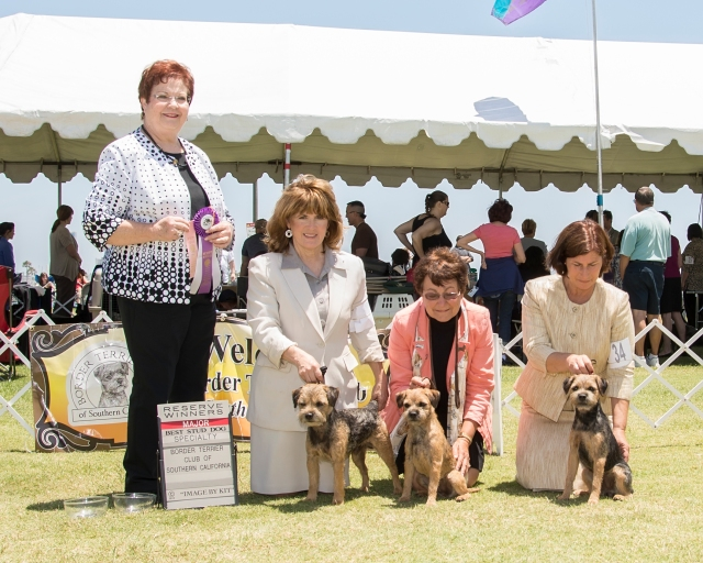 BEST STUD DOG - GCH Sundevil's Lil Boy Blue, owner Sheila Hanna, judge Pamela Peat